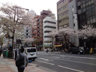 散りだした市ヶ谷の桜
